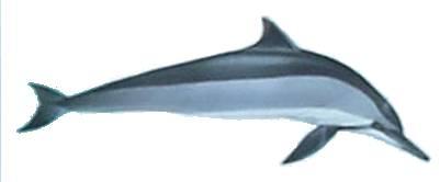 dauphin-a-long-bec